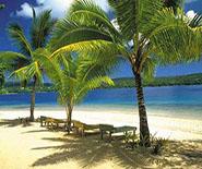 TBR_palms_beach_185