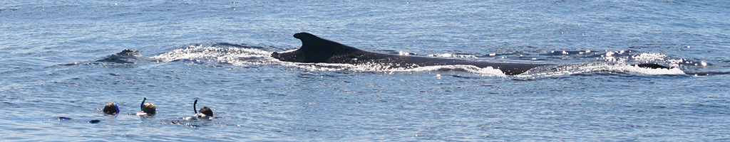 footer_2011_2721_whale_people2
