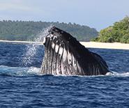 whalesinparadise_2013_0388_spyhop