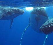 2013_3372_3whales