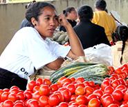 Best_vavau_tomatoes_market