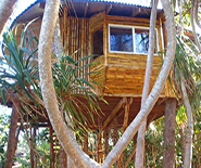 the treehouse_fale
