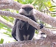 monkey_tree_185
