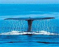 blue-whale_fluke_waterfall_185