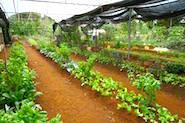 VavVilla_veg_gardens_185x123