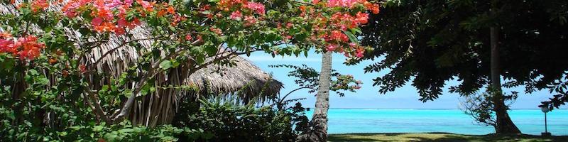 hibiscus__superior_lagoon2_800x200